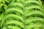 green-187949_150