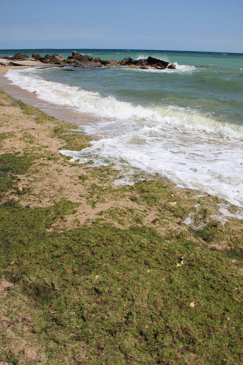 tengeri alga 2